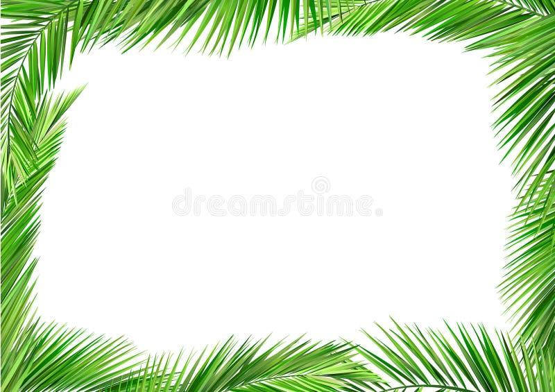 Coconut leaves frame royalty free illustration