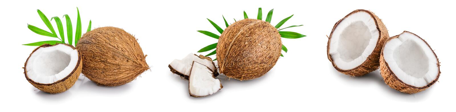 Coconut with leaves isolated on white background. Set or collection.  royalty free stock images