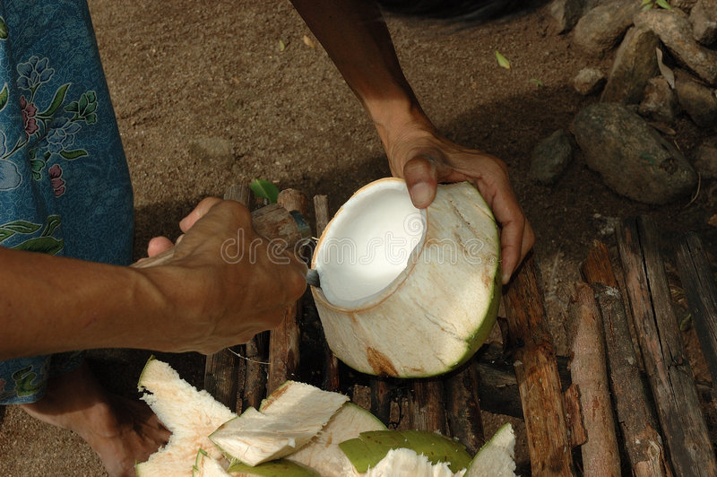 Download Coconut Meat Is Expertly Removed For A Snack Stock Image - Image: 1462929