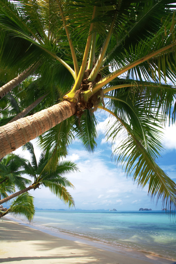 Download Coconut palm stock photo. Image of tree, shore, crown - 2329934