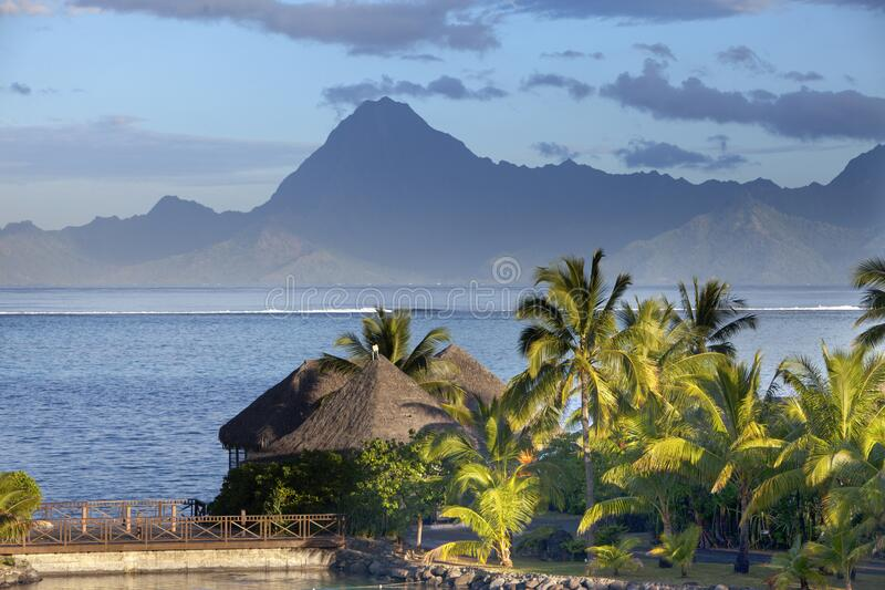 Coconut Palm Baum am Strand, Meer und Berge bei Sonnenuntergang, Tahiti lizenzfreie stockfotografie