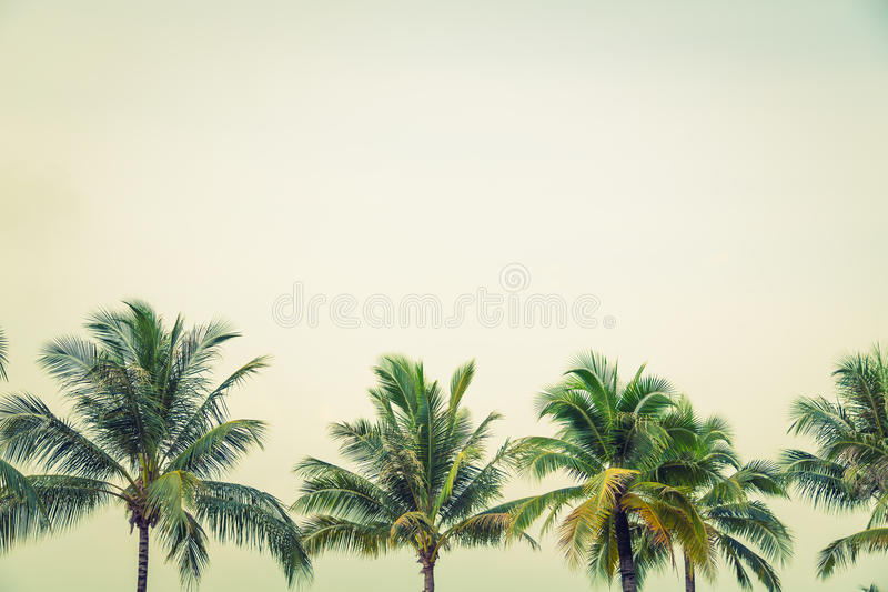 Coconut palm ( Filtered image processed vintage effect. ) stock photos