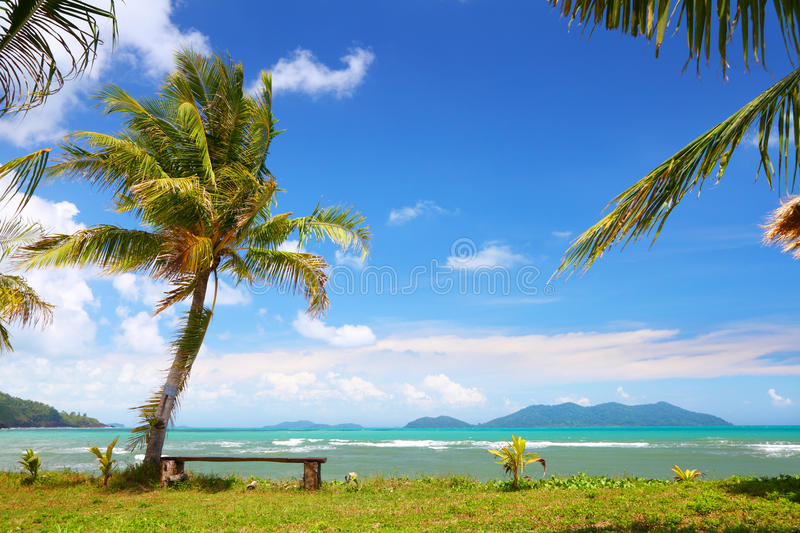 Download Coconut palm on island stock image. Image of landscape - 25355943