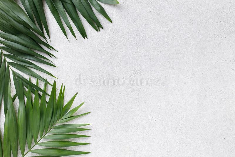Coconut palm leaves on grey background stock photo