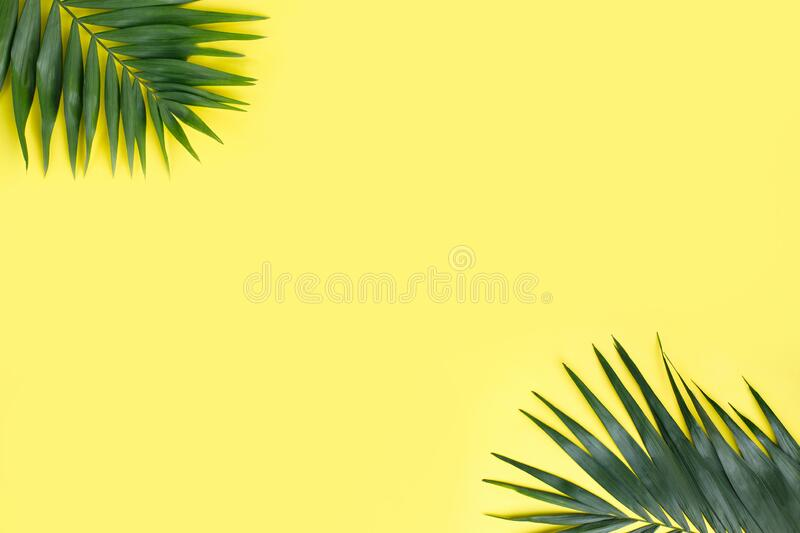 Coconut palm leaves on yellow background royalty free stock images
