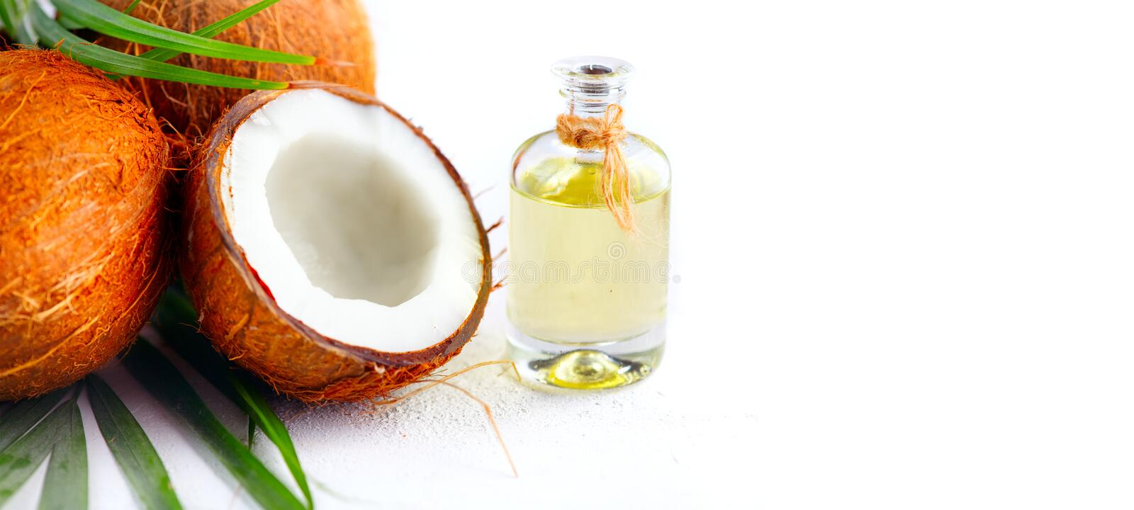 Coconut palm oil in a bottle with coconuts and green palm tree leaf on white background. Coco nut closeup. Healthy food, skincare. Concept stock image