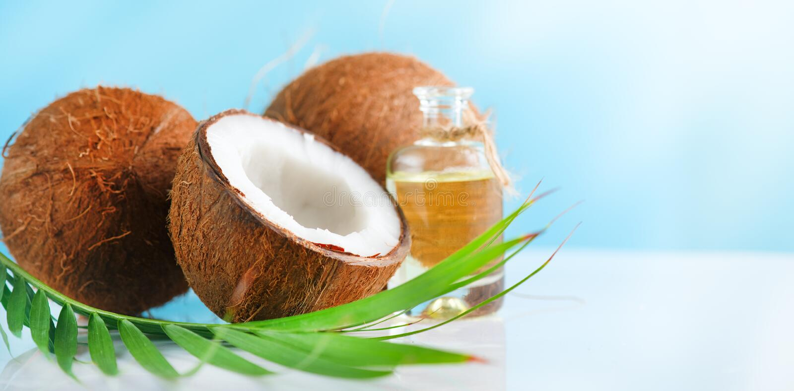 Coconut palm oil in a bottle with coconuts and green palm tree leaf on a blue and white background. Beauty treatments. Coco nut cl. Oseup. Healthy Food, skin royalty free stock image