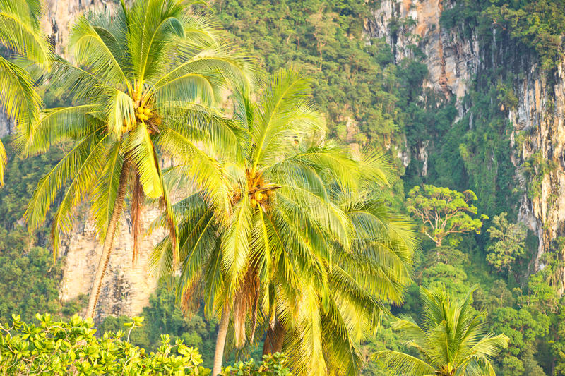 Download Coconut palm tree stock photo. Image of nature, fruit - 19792446