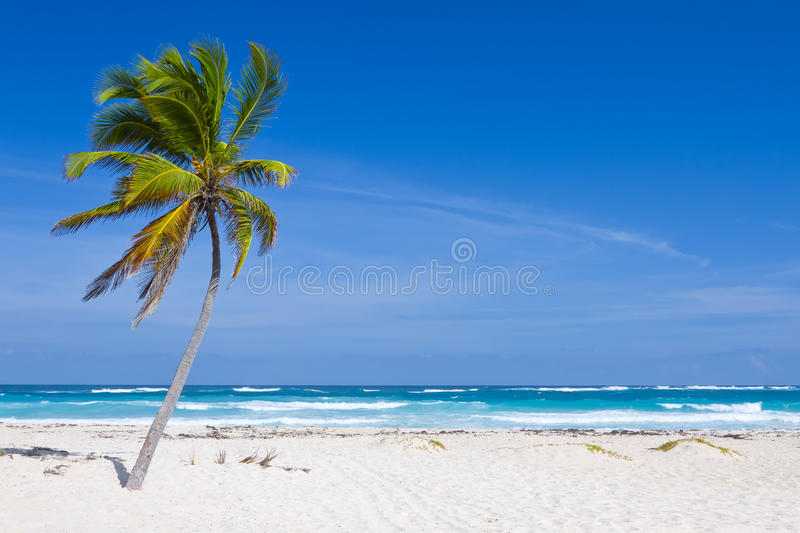 Download Coconut Palm Tree Stock Photos - Image: 25696763