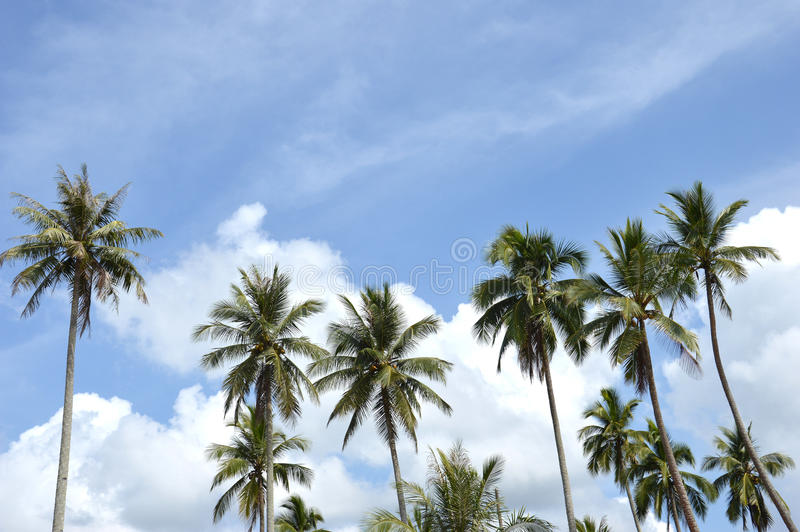 Download Coconut Palm Stock Image - Image: 34441881