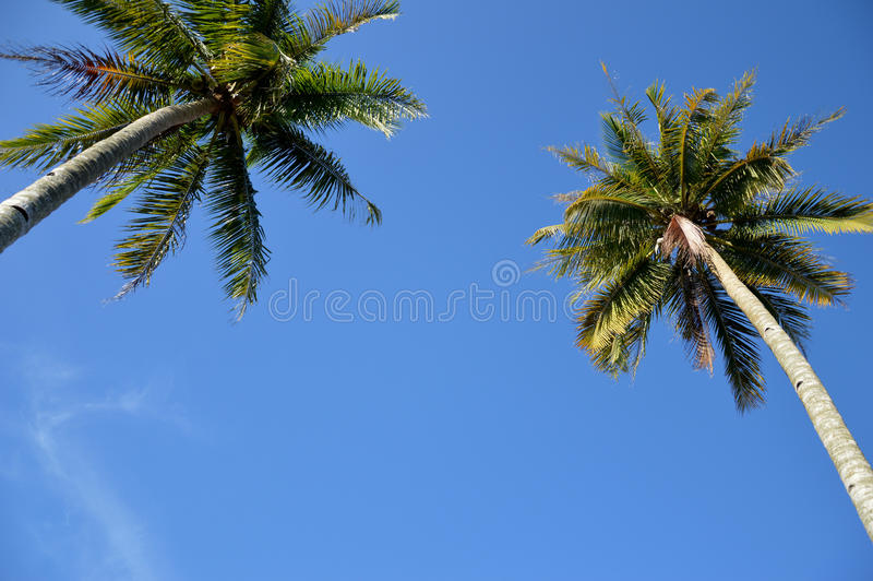 Download Coconut palm stock image. Image of leaf, blue, green - 35137699