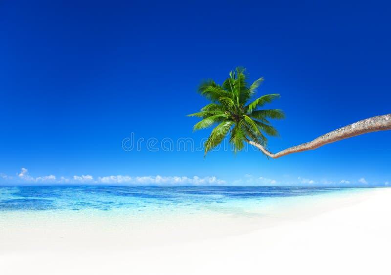 Coconut Palm Tree Beach Summer Seascape Concept stock photo