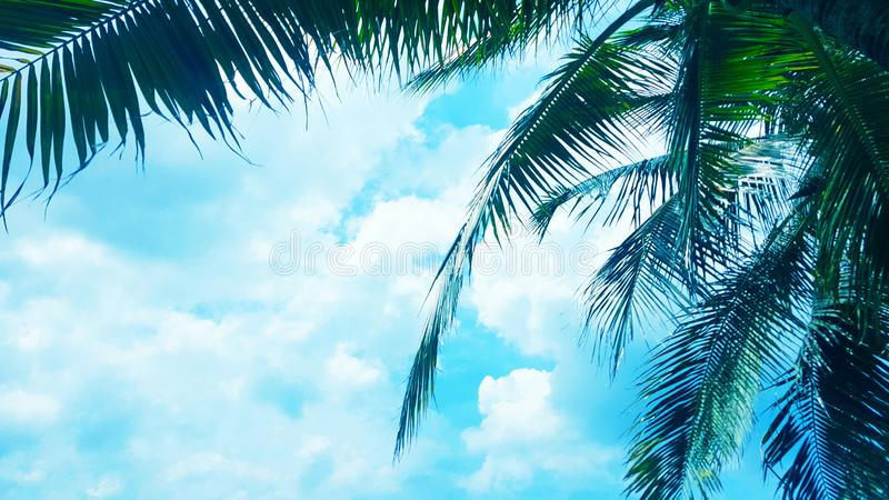 Coconut palm tree on Blue clouds sky background, beautiful view landscape stock images