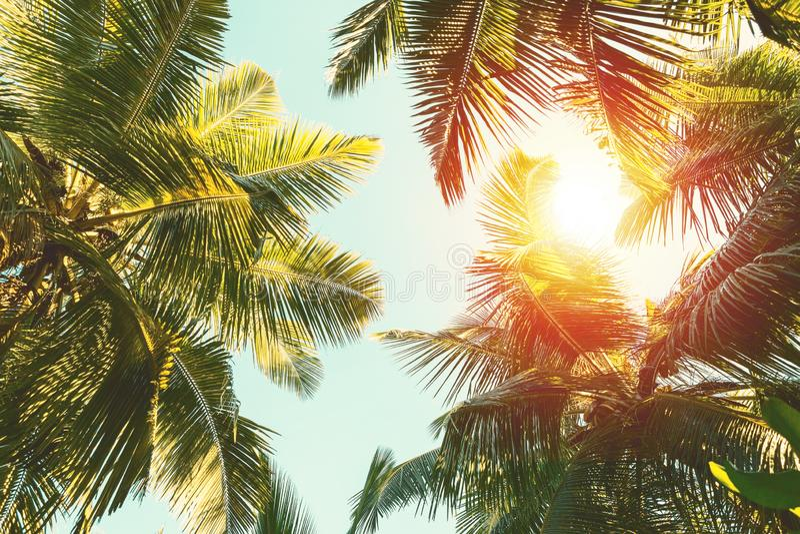 Coconut palm tree on blue sky background.  stock photography