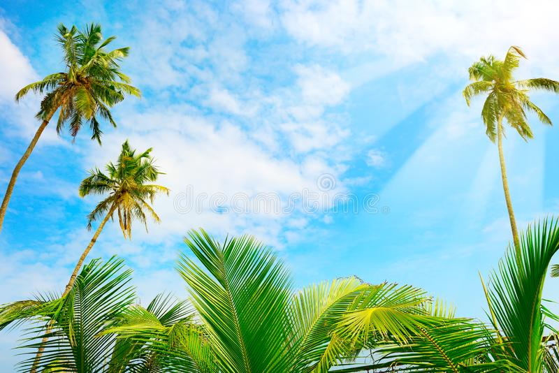 Coconut palm tree and blue sky with bright sunshine royalty free stock photos