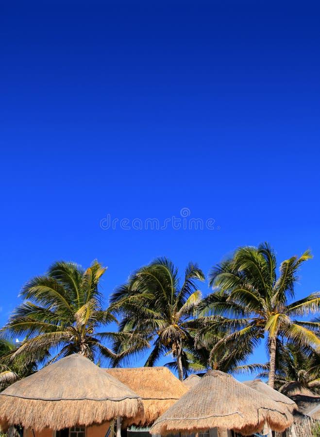Coconut Palm Tree Blue Sky Hut Palapa Sun Roof Stock Photo