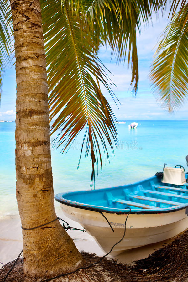 Download Coconut Palm Tree And A Boat Stock Photo - Image: 12246770