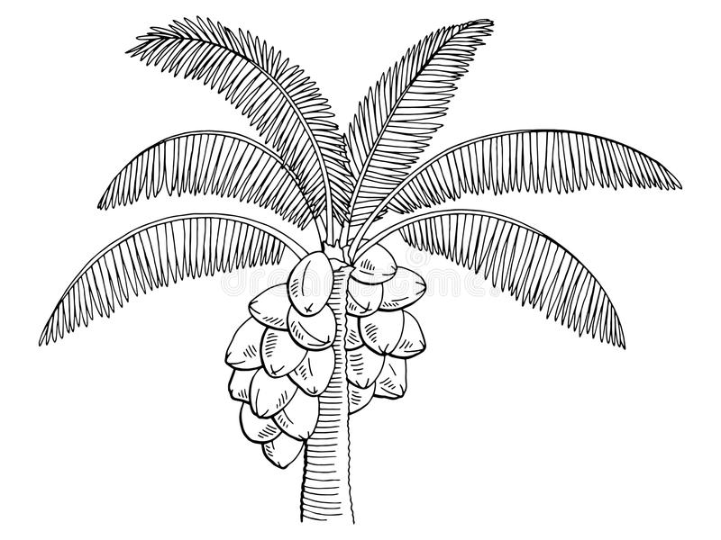 Coconut Palm Tree Graphic Black White Isolated Sketch