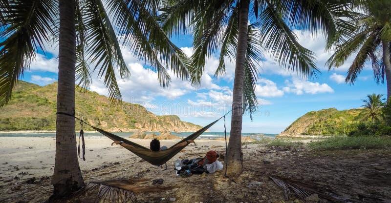 Coconut palm tree and hammock royalty free stock photo