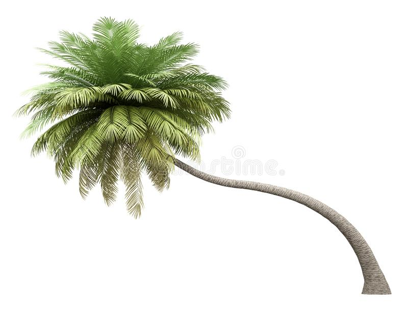 Coconut palm tree isolated on white. Background vector illustration