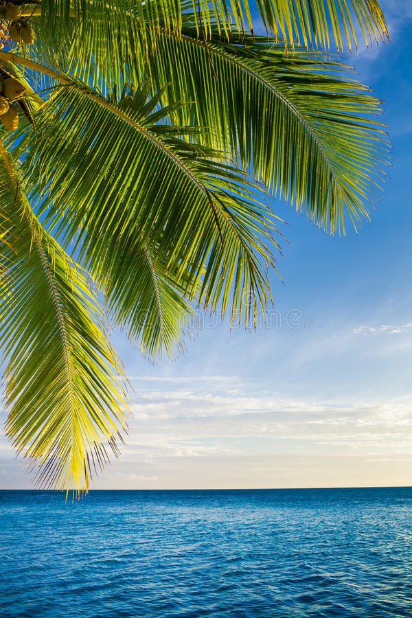 Download Coconut Palm Tree Leaves Over Endless Ocean Stock Photo - Image: 28136428
