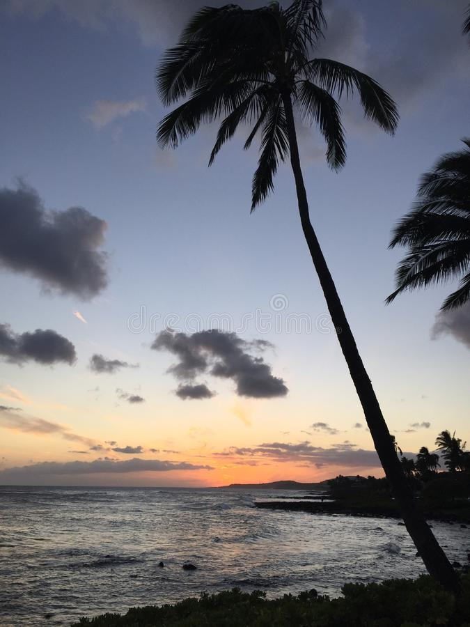 Coconut Palm Tree Near Ocean During Sunrise Free Public Domain Cc0 Image