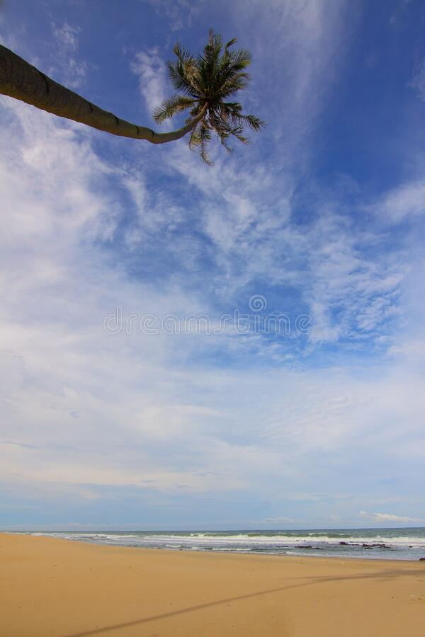 Coconut Palm Tree Near Seawater Waving on Sand Under Blue Sky and White Clouds during Daytime stock photography