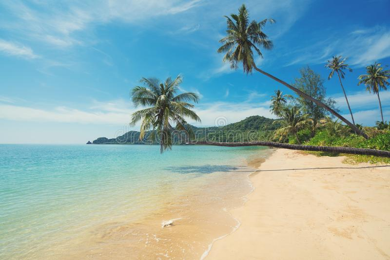 Coconut palm tree over summer beach sea in Phuket ,Thailand. Sum. Mer, Travel, Vacation and Holiday concept stock photography