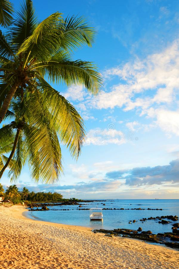Coconut palm tree on sandy beach.Tropical coast of Mauritius island at sunset. royalty free stock image