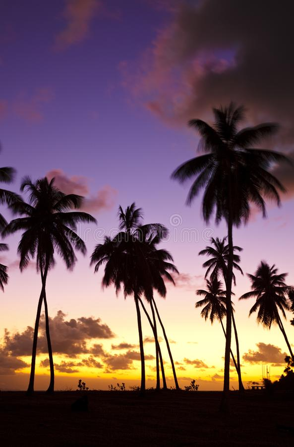 Colorful Caribbean Sunset And Palm Trees, Antigua. Coconut palm tree silhouettes in front of a beautiful caribbean sunset stock images