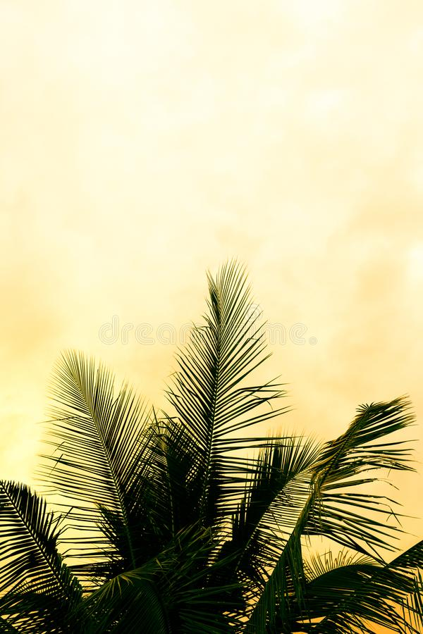 Coconut palm tree silhouettes at sunset. Sunrise royalty free stock photos