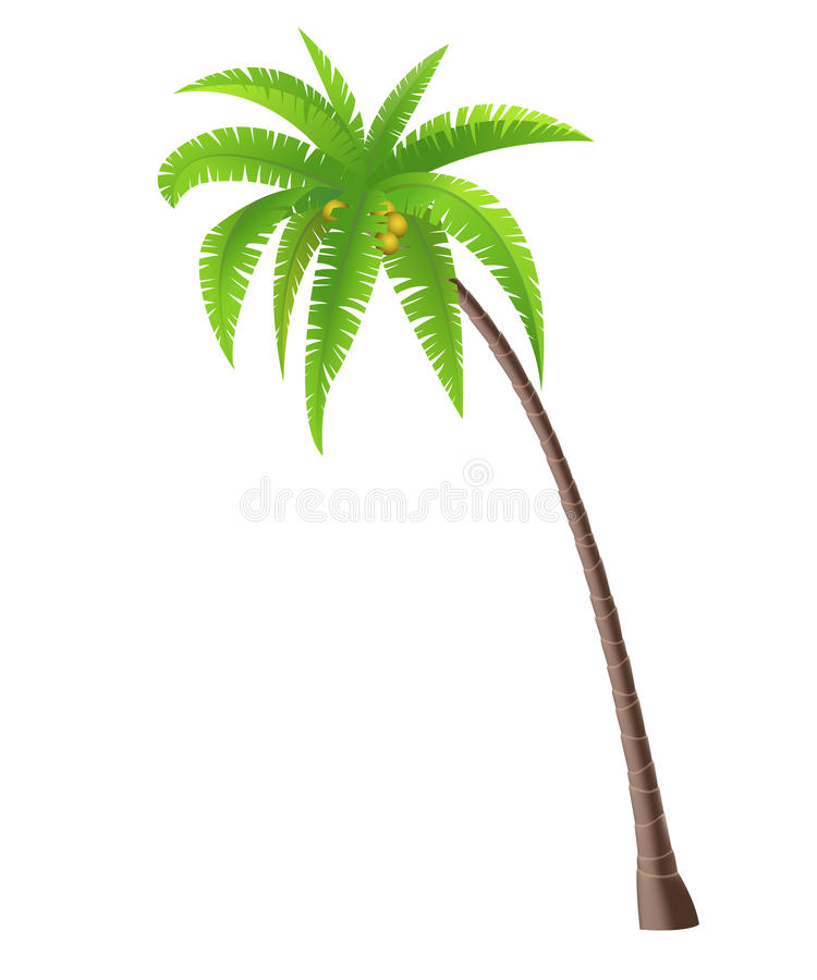 Coconut Palm tree royalty free illustration