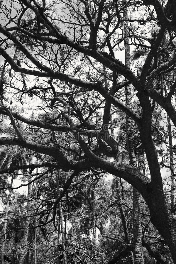 Coconut palm trees. stock photos