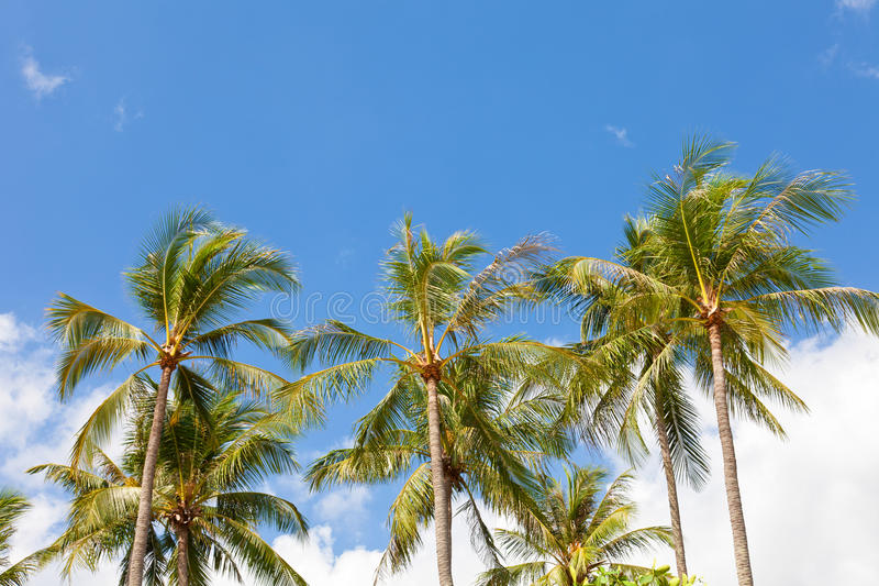 Download Coconut palm trees stock photo. Image of jungle, warm - 30022000