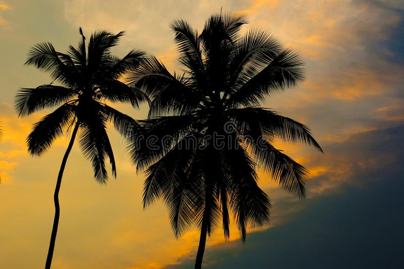 Coconut palm trees with amazing sky background stock photo