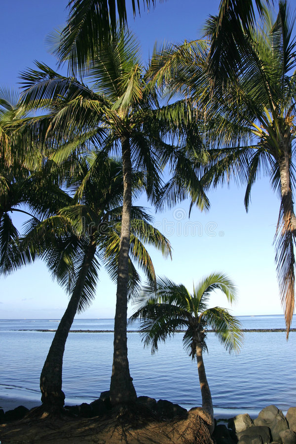 Download Coconut Palm Trees At The Beach Stock Photo - Image: 1386478