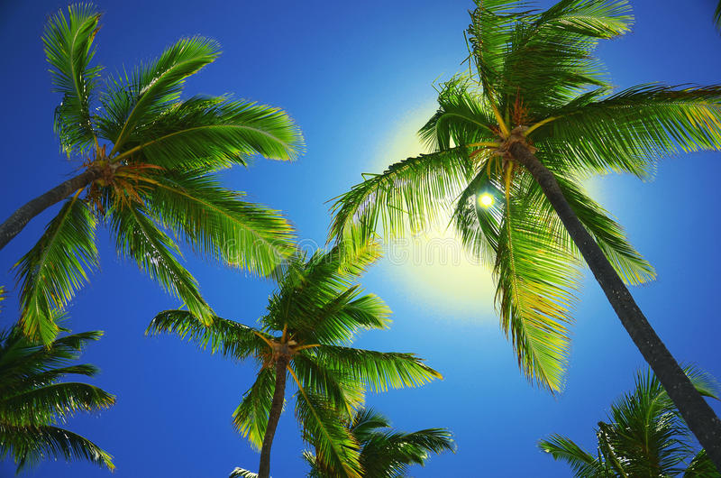 Coconut palm trees on the beach, perspective view stock photos