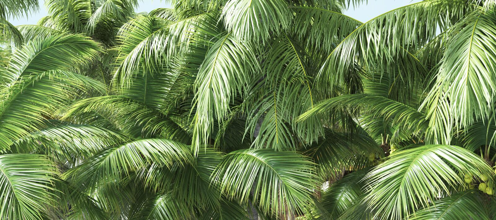 Coconut palm trees, beautiful tropical background royalty free stock images
