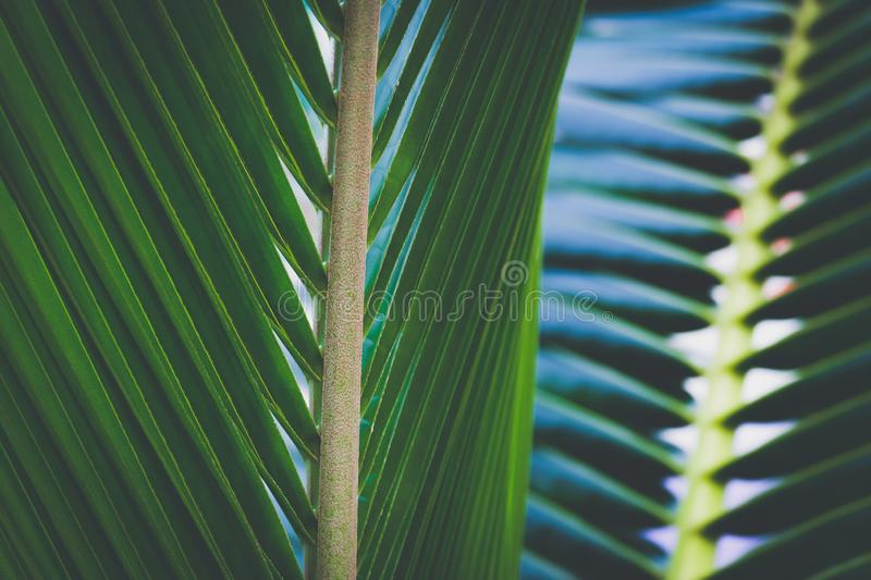 Coconut palm trees, beautiful tropical background. royalty free stock photo