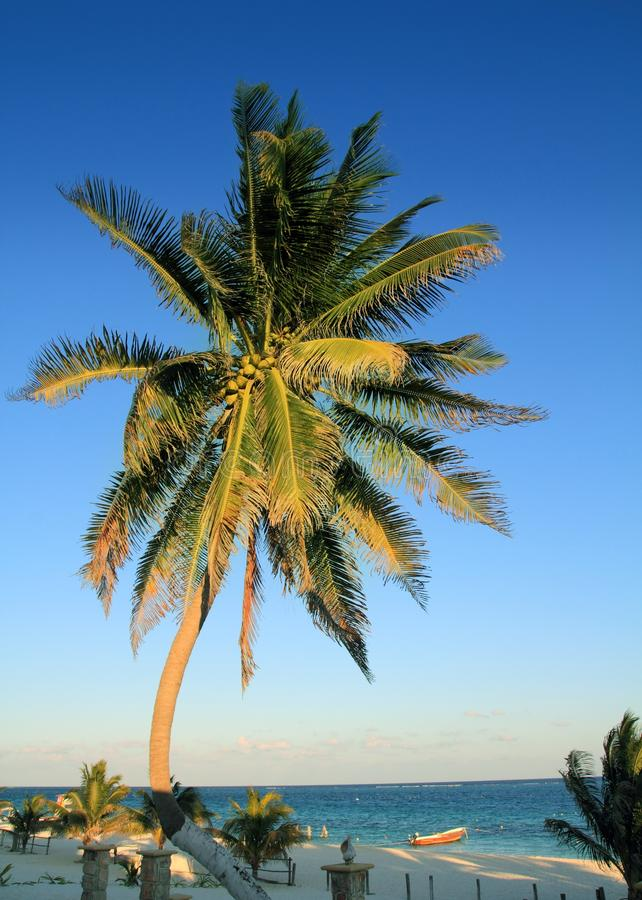 Download Coconut Palm Trees Caribbean Tropical Beach Royalty Free Stock Photo - Image: 18387305