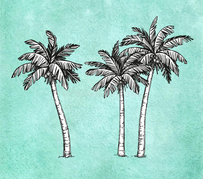 Coconut palm trees vector illustration