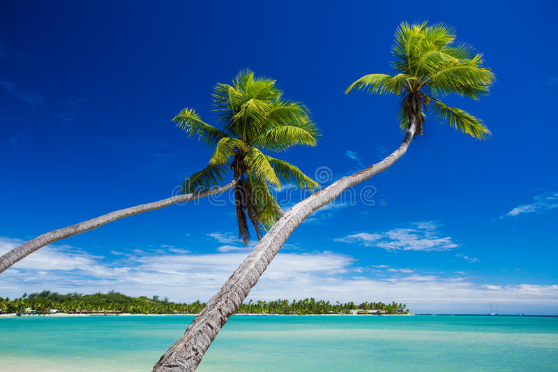Coconut Palm Trees Hanging Over Stunning Green Lagoon Stock Photos