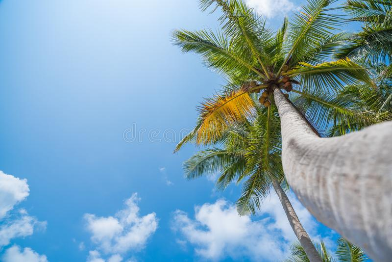 Coconut palm trees on tropical beach with beautiful blue sky. Image of tropical beach, holiday, vacation, recreation concept. Coconut palm trees on tropical stock photography