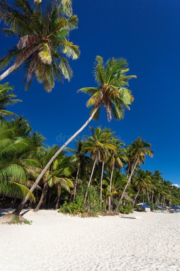 Coconut palm trees on tropical beach, Boracay royalty free stock photography