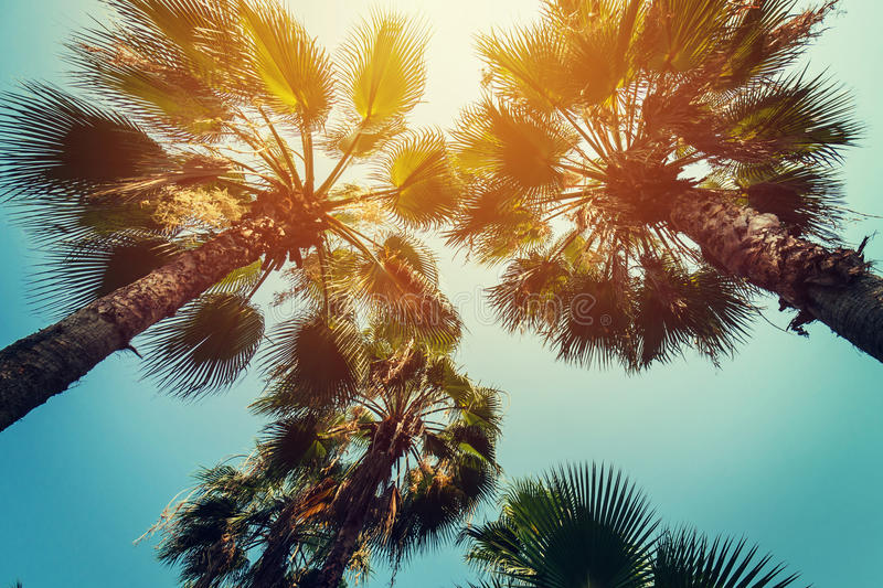 Coconut palm trees at tropical coast with vintage toned and film royalty free stock photo