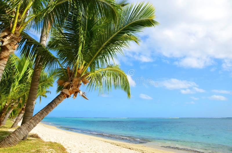 Coconut palm trees on tropical sandy beach of Mauritius island. stock photography