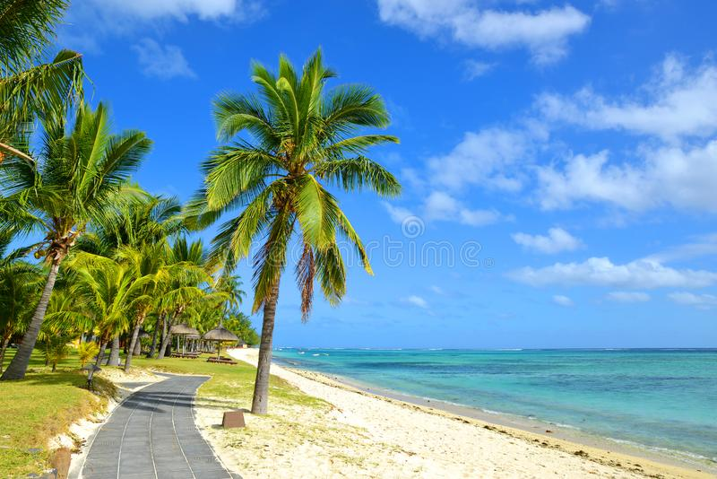 Coconut palm trees on tropical sandy beach of Mauritius island. stock image