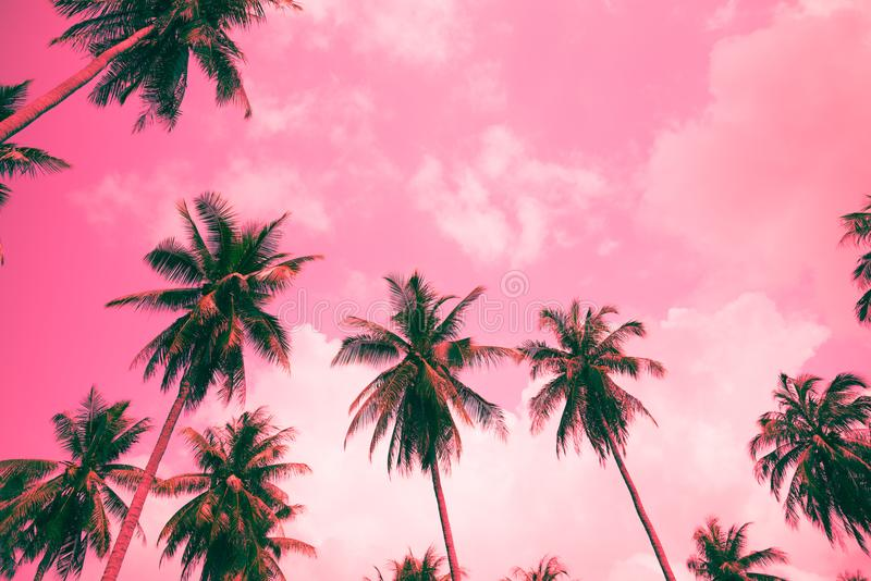 Coconut palm trees - Tropical summer breeze holiday, Color fun t royalty free stock photography