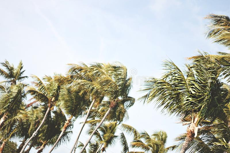 Coconut Palm Trees Under Grey Sky During Daytime Free Public Domain Cc0 Image