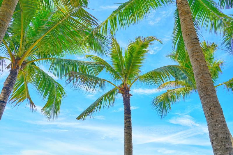 Coconut palm trees view and blue sky on the beach. royalty free stock photo
